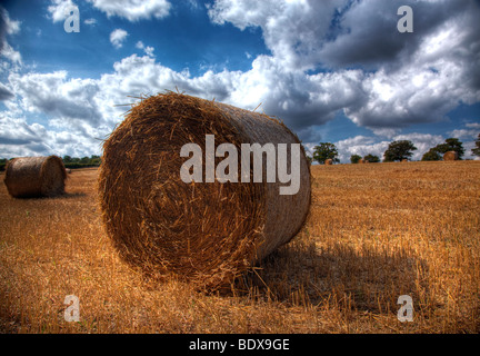 Hay rolls drying in a wheat field in Hertfordshire - Stock Photo