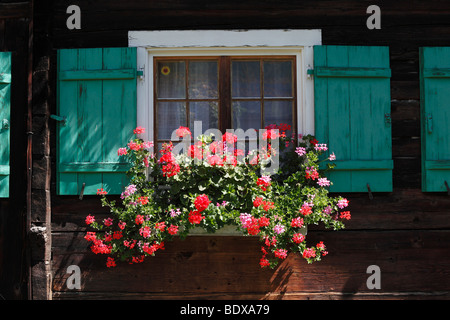 Geraniums in the window of a timber house, Schruns, Montafon, Vorarlberg, Austria, Europe - Stock Photo