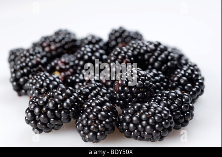 Blackberries (Rubus sectio Rubus) - Stock Photo