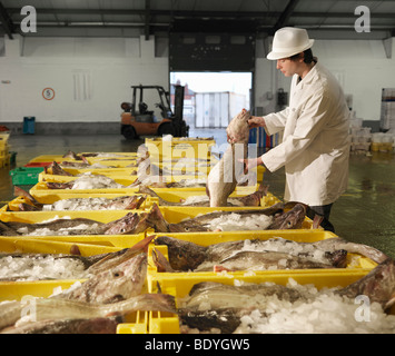 Worker Handling Fish In Market - Stock Photo