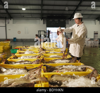 Worker Holding Fish In Market - Stock Photo