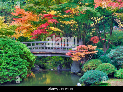 Japanese maple or fall portland japanese garden acer for Japanese garden colors