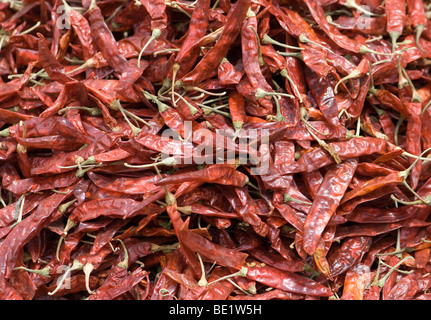 dried red Indian peppers - Stock Photo