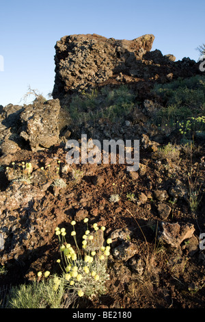 Cinder cones and rare flowers at Craters of the Moon National Monument in Idaho - Stock Photo