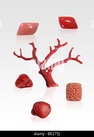 Red and pink coral specimens on white background - Stock Photo