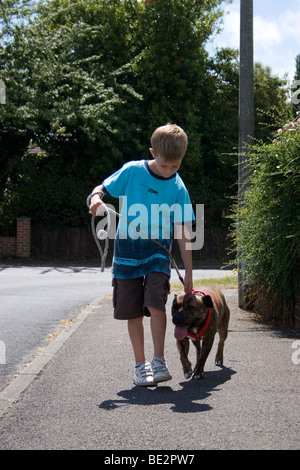 young boy walking his staffordshire bull terrier on lead on street - Stock Photo