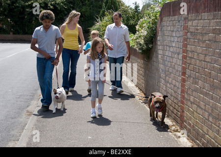 young parents with mixed race children walking in street with two staffordshire bull terrier dogs - Stock Photo