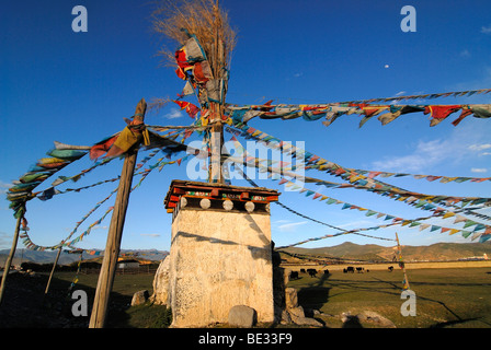 Tibetan chorten with prayer flags in front of yaks (Bos mutus), Tibetan yak, grazing on an highland meadow in front - Stock Photo