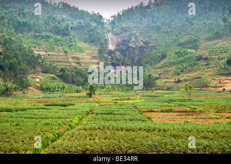 Agricultural fields in the north of Rwanda. - Stock Photo