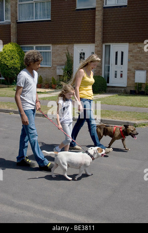 mother and children walking in street with their two staffordshire bull terriers - Stock Photo