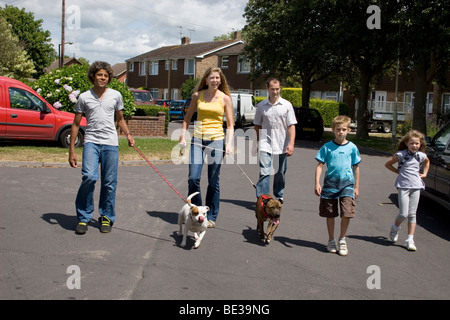 young parents with mixed races of children walking in street with two staffordshire bull terrier dogs - Stock Photo