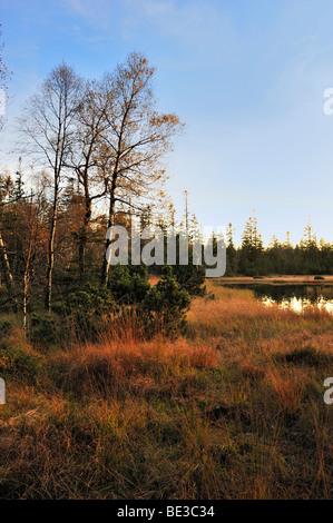 Grosser Hohlohsee Nature Reserve, Reichental Kaltenbronn, Black Forest, Baden-Wuerttemberg, Germany, Europe - Stock Photo
