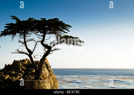 The Lone Cypress Tree at Pebble Beach on 17 Mile Drive, Pacific Grove - Stock Photo