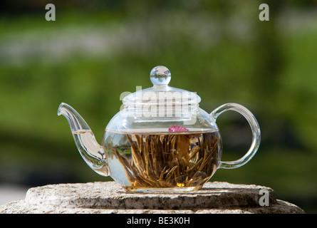 White tea in transparent jug - Stock Photo