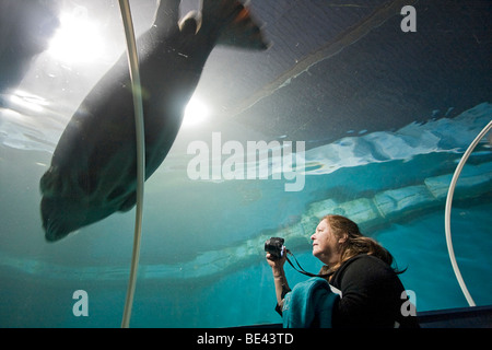Woman watches seal through window of glass tunnel in The Polaria museum and aquarium in Tromso. - Stock Photo