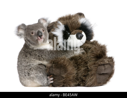 Portrait of male Koala bear hugging teddy bear, Phascolarctos cinereus, 9 months old, in front of white background - Stock Photo