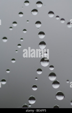 Water drops, dew on spider's web - Stock Photo