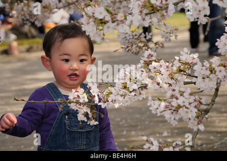Little boy marvelling at the famous cherry bloom, cherry blossom festival at the botanical garden, Kyoto, Japan - Stock Photo