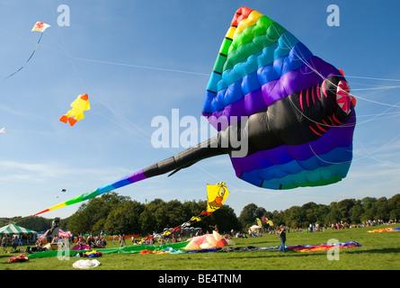 Giant Kite, Stingray, Manta, Person, International Kite Festival, Bristol, UK