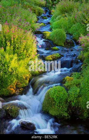 Paradise Creek in Mount Rainier National Park - Stock Photo