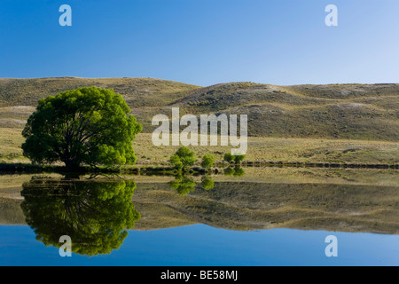Water reflections of trees and hills on a lake, Hakatere, South Island, New Zealand - Stock Photo