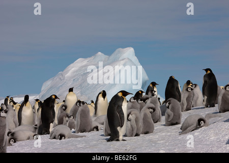Breeding colony of Emperor Penguins at Snow Hill Island in Antarctica - Stock Photo