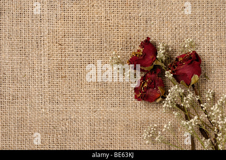 Three red withered roses on burlap background - Stock Photo