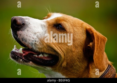 Portrait of a mongrel dog - Stock Photo