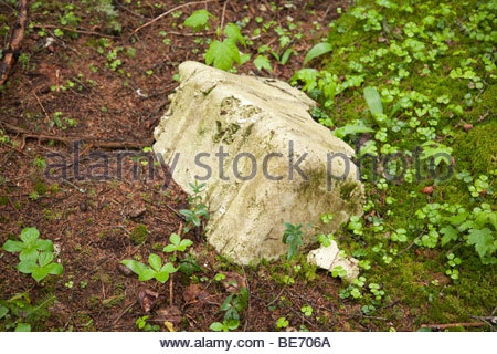 Poor 'Leave No Trace' habits near Shoal Pond in the White Mountains, New Hampshire USA - Stock Photo