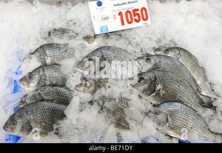 A yellowfin sea bream Stock Photo: 25305183