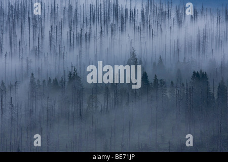 Cloudy mood on the peak of Lusen Mountain, Bavarian Forest National Park, Bavaria, Germany, Europe - Stock Photo