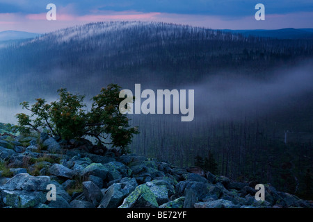 Cloudy atmosphere on Mt Lusengipfel, Bavarian Forest National Park, Bavaria, Germany, Europe - Stock Photo