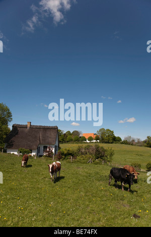 Brodersby municipality, Angeln region, eastern down, Schleswig-Holstein, Germany, Europe - Stock Photo