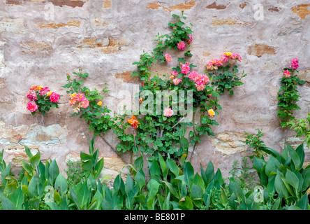 Gardens with roses at the Carmel Mission. Carmel by the Sea, California. - Stock Photo