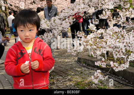 Little boy marvelling at cherry blossom at the famous cherry blossom festival at the Botanical Garden, Kyoto, Japan, - Stock Photo