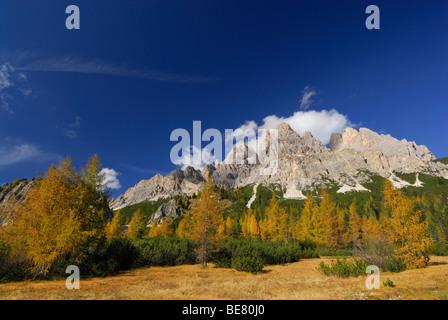 Cristallo range above larches in autumn colours, Dolomites, South Tyrol, Italy - Stock Photo