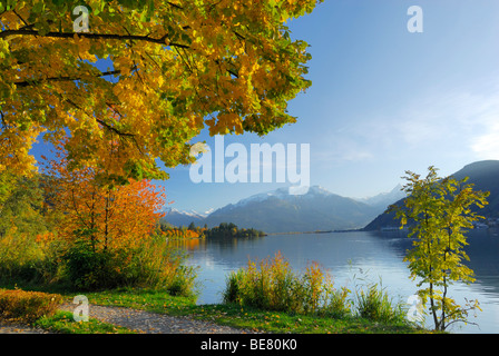 Trees in autumn colours at lake Zeller See, Zell am See, Salzburg, Austria - Stock Photo