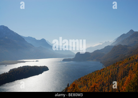 View to lake Silser See with larches in autumn colours, Oberengadin, Engadin, Grisons, Switzerland - Stock Photo