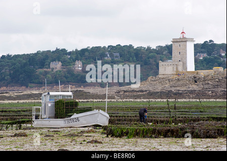 Oyster farmer in the Bay of Morlaix, Finistere, Brittany, France, Europe - Stock Photo