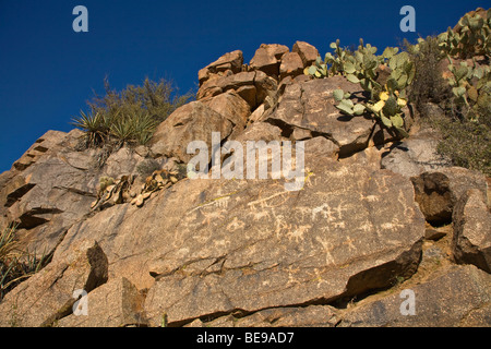 Ancient indian petroglyphs on rocks along Badger Springs Wash Trail at Agua Fria National Monument, Arizona, BEAN - Stock Photo