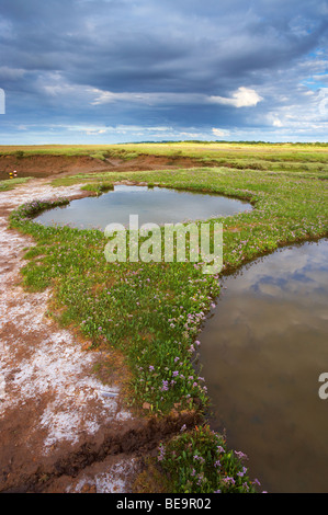 The Saltmarshes near Burnham Deepdale on a summer evening on the North Norfolk Coast - Stock Photo