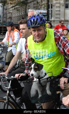 Dog in bicycle basket during Mayor of London`s Skyride, London, England, UK - Stock Photo