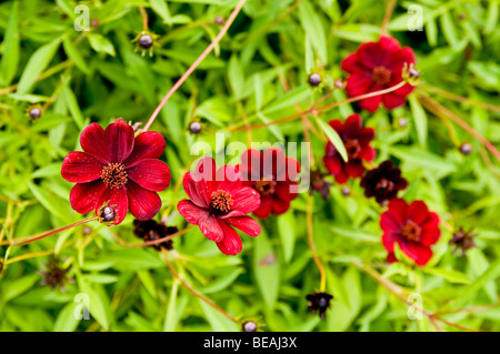 Small red flowers - Stock Photo