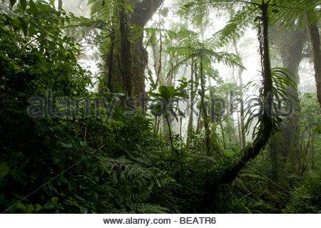 Santa Elena Biological Reserve, Costa Rica - Stock Photo