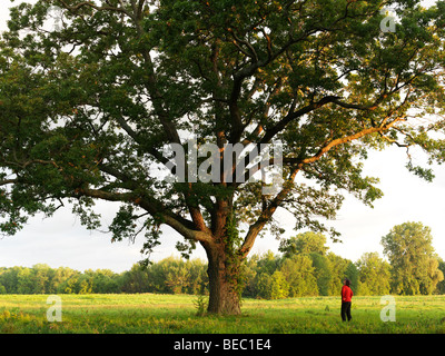 Canada Ontario Niagara-on-the-Lake,young woman looking up at a 200 year old Oak tree - Stock Photo