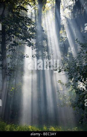 Bright sunlight through trees crowns. - Stock Photo