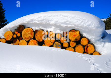 Forestry, cut logs under a thick snow cover, Jura, Switzerland - Stock Photo