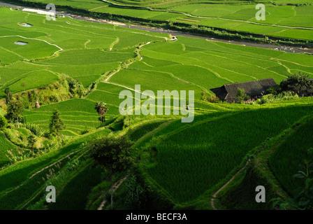 Rice terraces and village of the Miao Minority, Xijiang, Guizhou, Southern China - Stock Photo