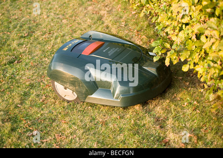 Automatic robot lawn mower cutting grass and running into a hedge - Stock Photo