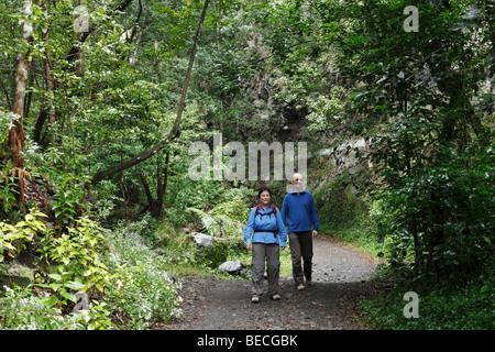 Couple walking on a path through the woods, Cubo de la Galga, El Canal y Los Tilos Biosphere Reserve, La Palma, Canary Islands,